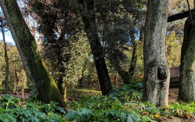 Info parc Strohl Fern